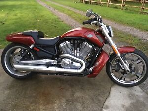 2010 Harley Vrod Muscle  tres propre negotiable