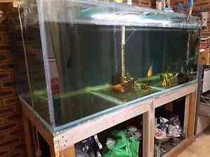 Fish tank ( Giant tank)1200ltrs Miranda Sutherland Area Preview