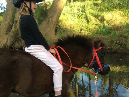 Horse/pony training and or braking