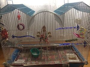 Budgie + Cage & Accessories for sale