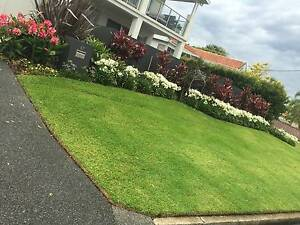 Cagney Lawn Mowing & Garden Service -  Newcastle Newcastle Area Preview