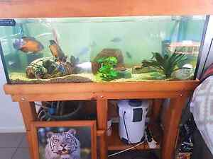 FISH TANK AND EVERYTHING Dakabin Pine Rivers Area Preview