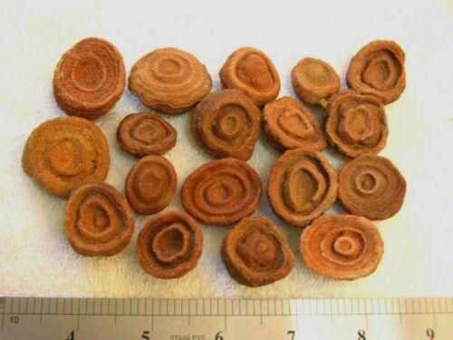 Stromatolite fossils ancient earth life 1 billion years 4 fossils per winner