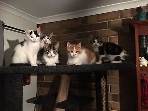 Kittens to good home Globe Derby Park Salisbury Area Preview