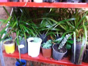 Plants pictured any 12 for $10. Bald hills location