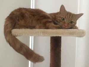 LOST CAT - WHEELERS HILL Wheelers Hill Monash Area Preview