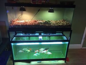 2-75 Gallon Aquariums with Stand