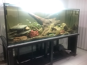 7×3×3ft tank with metal stand and sump tank Brassall Ipswich City Preview