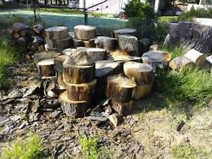 Free hFire Wood Pine Tree