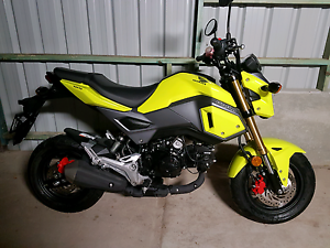 2016 Honda Grom East Brisbane Brisbane South East Preview