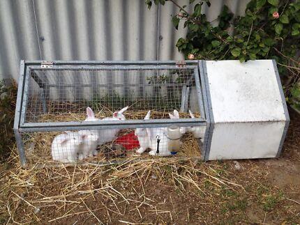 Large Rabbit Hutch Hillman Rockingham Area Preview