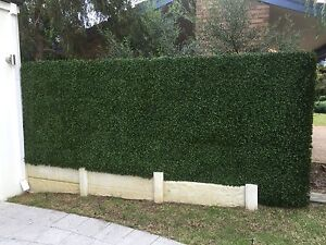 Smart Hedge Melville Melville Area Preview