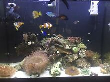 250 litre saltwater marine tank full set up Mudgeeraba Gold Coast South Preview