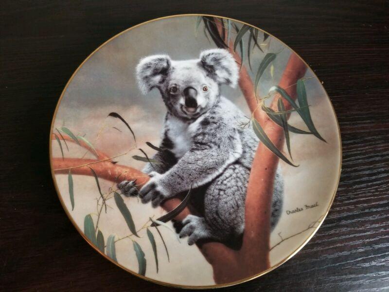 The Koala Nature