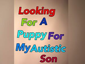 Puppy for autistic son Gawler Gawler Area Preview