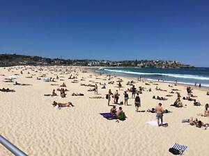 Wanted International male for Bondi Beach flat