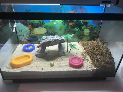Two hermit crabs, amazing tank, heater, light, all accessories