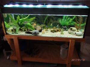"""COMPLETE  4 ft x 18 """" x 18 """" FISH TANK & STAND & FILTER  ETC , Gulliver Townsville City Preview"""