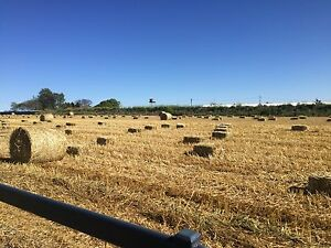 Small Bales Oaten Hay Westbrook Toowoomba Surrounds Preview