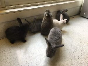 Bunnies for sell