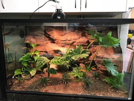 Terrarium ideal for lizards