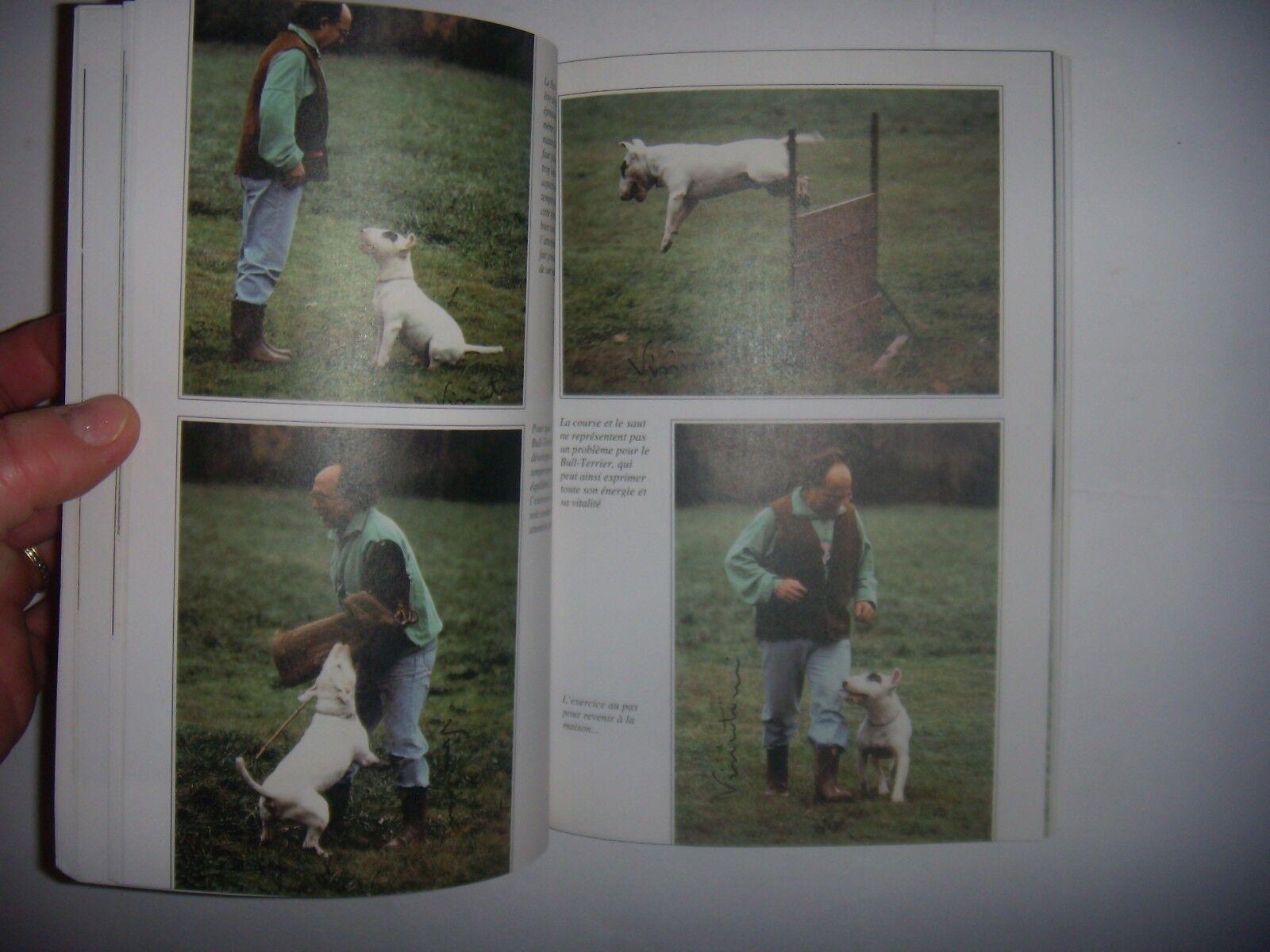 Chiens de race: le bull-terrier: origines, caractère, reproduction, éducation...