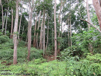 Walk In The Tropical Forest