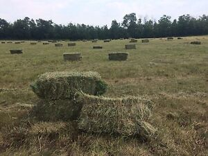 Horse hay for sale (square bales)
