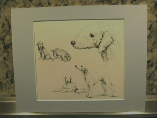 """Bedlington Terrier Print w/ Steel Blue Mat *  Matted to 8 x 10""""  Ready to Frame!"""