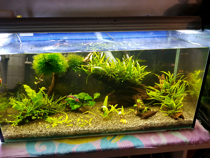 Tank with plants and driftwood