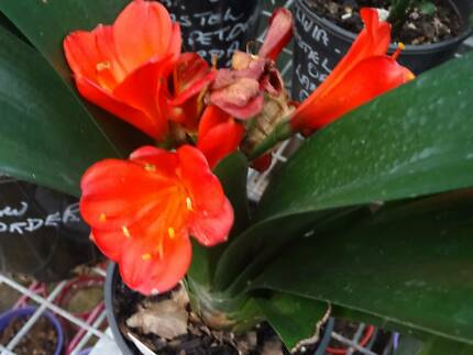 GARAGE SALE --  PLANTS LARGE VARIETY ORCHIDS STILL AVAILABLE
