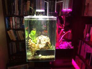 Aquarium brio35 Aquaponic