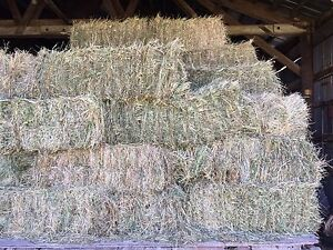 Beautfuil green grassy clover horse hay for sale