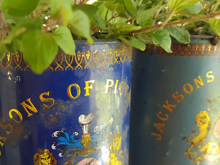 Oregano In Old Tea Cans