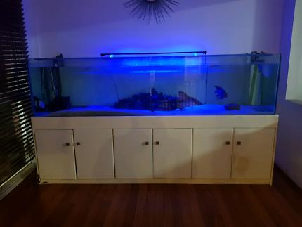 Fish tank 8ft
