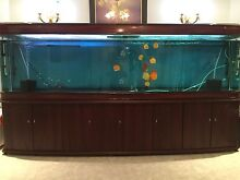 Biggest Display Fish Tank on gumtree 10foot long Landsdale Wanneroo Area Preview