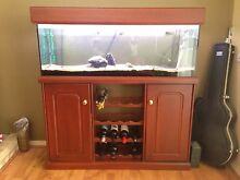 """48 inch 4 foot 4"""" tank aquarium stand hood lights wine rack stained Winthrop Melville Area Preview"""
