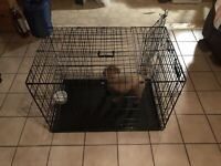 Medium Sized Dog Crate for Sale