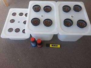 Entry level hydroponics kit Neutral Bay North Sydney Area Preview