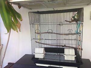 Bird cage ( black) Sunrise Beach Noosa Area Preview
