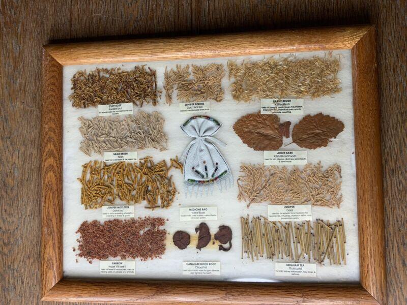 Vintage Navajo Medicine Chart Christine Lewis Native American 10 Plants Framed
