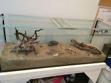 Wanted, hermit crabs Launceston 7250 Launceston Area Preview