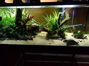 Live Aquarium Plants