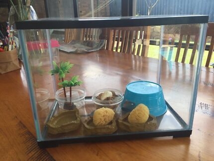 Crazy crab tank and accessories   Hamersley Stirling Area Preview