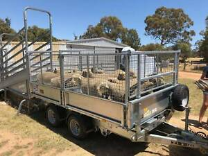 NEW 3.6x2 Tipper / livestock Trailer - Ifor Williams 3.5t ATM Kenwick Gosnells Area Preview