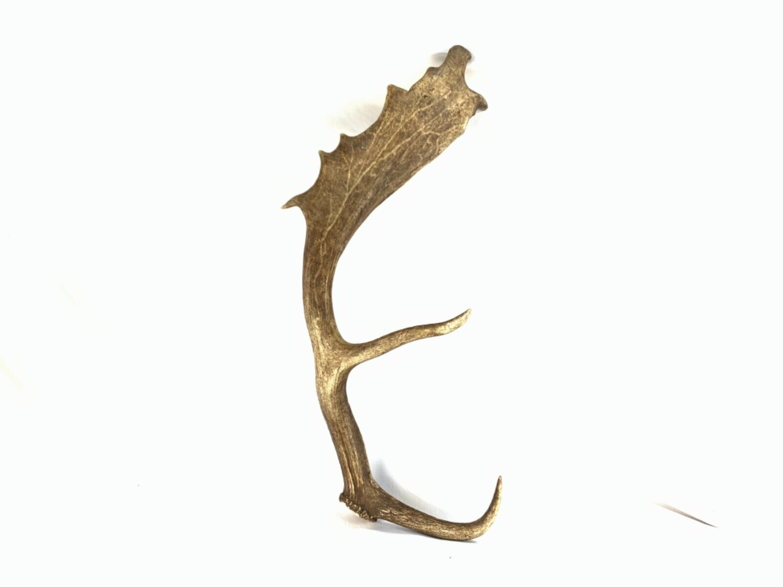 Nice Single Moose Shed Antler Paddle Rustic Cabin Decor Taxidermy Man Cave