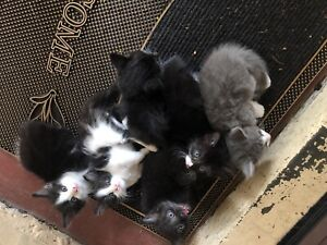 Kittens for sale !