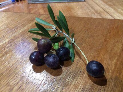 2017 Olive oil