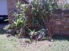 FREE plants for pick up 2066 Lane Cove Lane Cove Area Preview