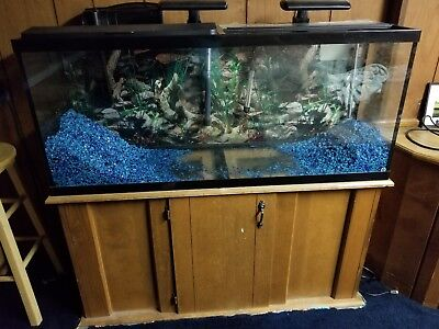 55 Gall Fish Tank Stand Set Up